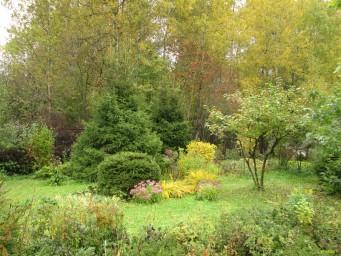 Осенняя клумба
