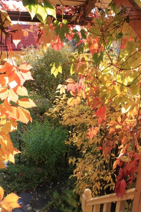 Осенняя палитра